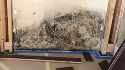 mold_water_damage_insurance_adjustor